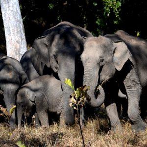 elefanti al parco naturale di madumalai
