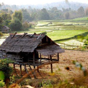 campagna nei dintorni di tat kuang si in laos