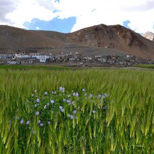 paesaggio del ladakh