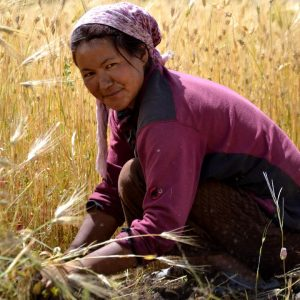 contadina ladakha a hemis suchpachan in ladakh