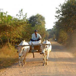 contadino nella campagna vicino a kampot in cambogia