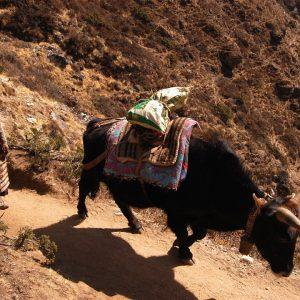 donna contadina sui sentieri del Solokhumbu