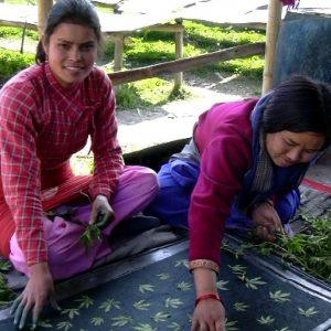 produttrici di carta di dafne in nepal