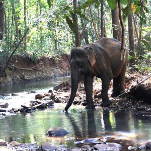 progetto di salvaguardia degli elefanti nel mondulkiri