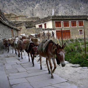 villaggio di marpha nel basso mustang in annapurna