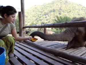 progetto salvaguardia degli elefanti a chiang mai